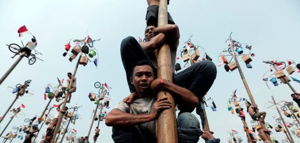 La tradición que asombra al planeta: los premios más extraños por escalar un árbol