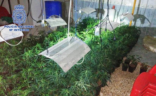Detenido en Almería por tener en casa de su abuela una plantación de marihuana hallada en un conato de incendio
