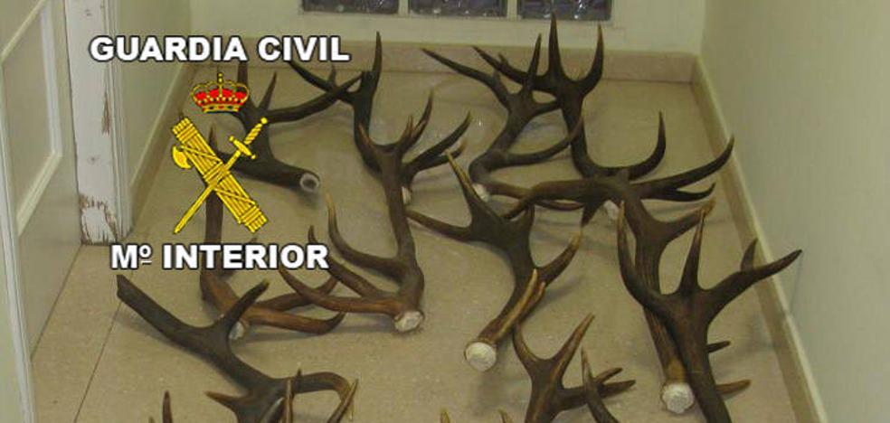 Cuatro detenidos por el robo de trofeos de caza valorados en 10.000 euros