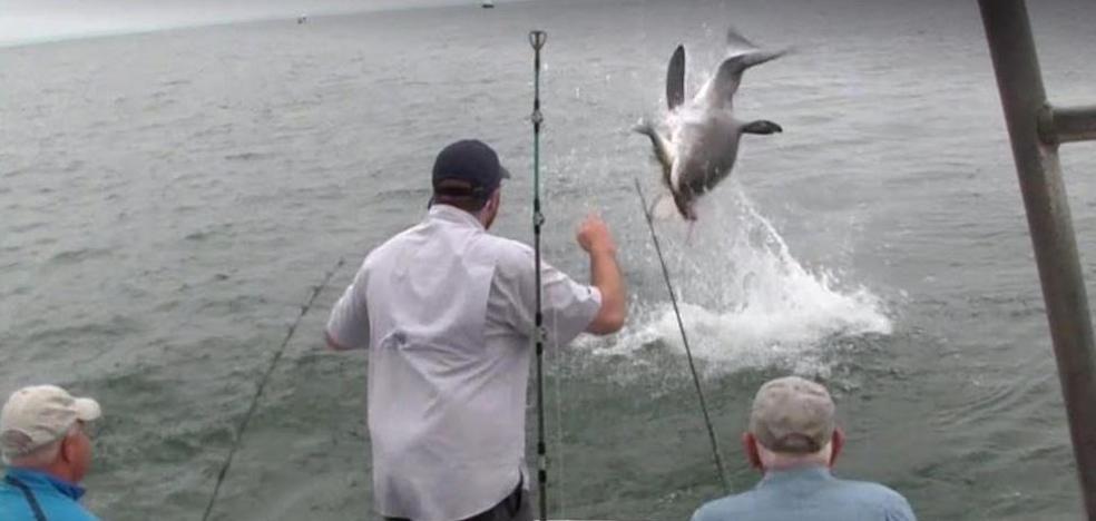 El brutal susto de unos pescadores sorprendidos por un tiburón blanco