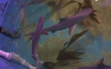 Encuentran diez tiburones en la piscina de una casa