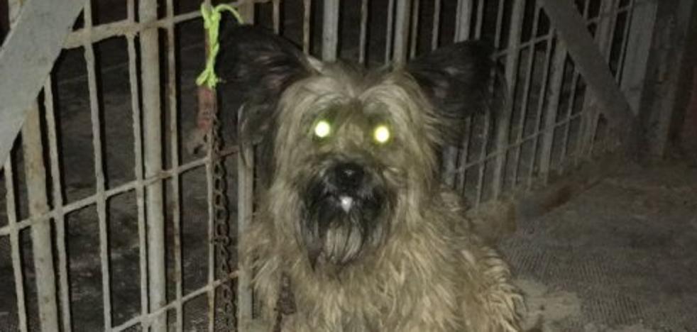 Abandonan a un perro en plena noche y lo atan en la puerta de la perrera