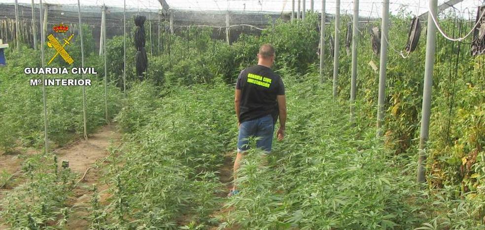 Localizan una plantación de cannabis en un invernadero de Granada