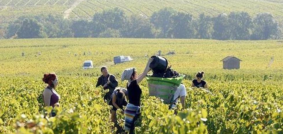 Prorrogan la detención del presunto implicado en la falsa oferta de trabajo para la vendimia francesa