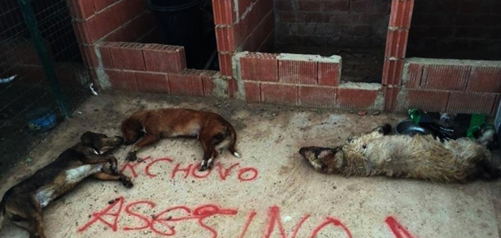 Matan a los perros del último lancero del Toro de la Vega en una presunta venganza
