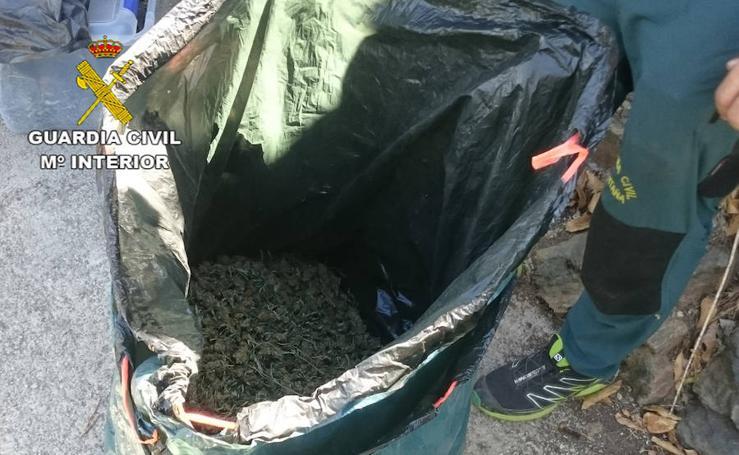 Descubren más de 3.000 plantas de marihuana en el Parque Natural de Sierra Nevada