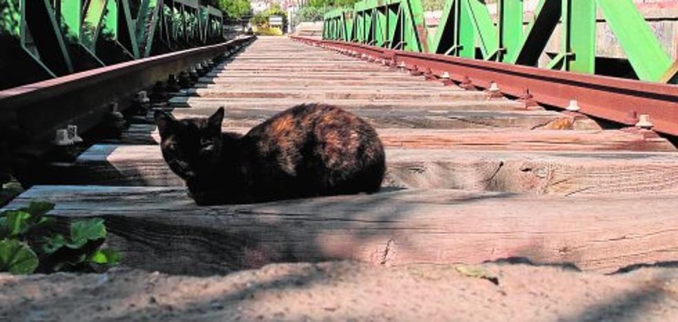 Los arquitectos ven inviable soterrar el tren hasta los muelles del puerto