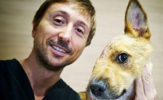 Tres cirujanos de Valencia salvan a un perro que solo tiene media cara