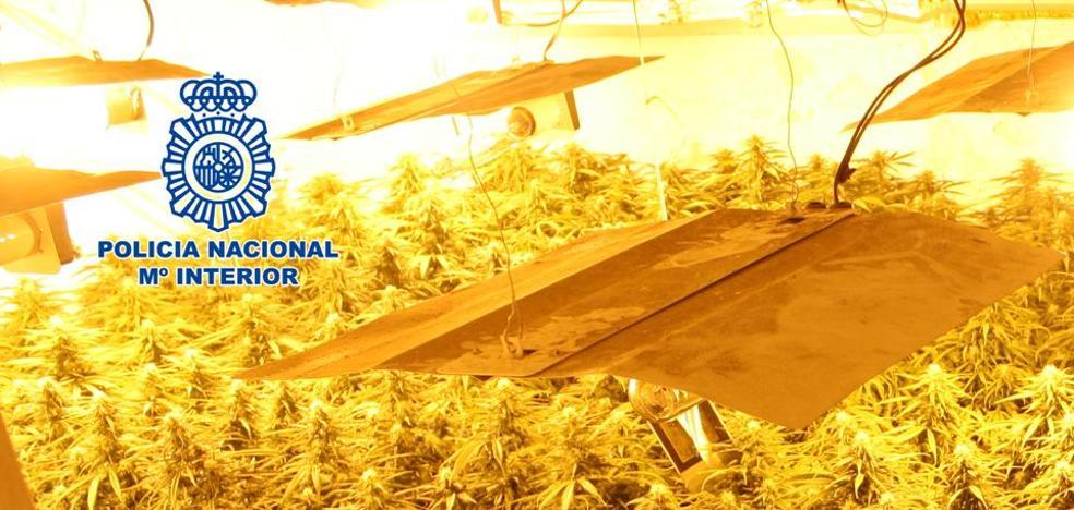 Dos detenidos y 800 plantas de marihuana intervenidas en una casa de la Zona Norte de Granada