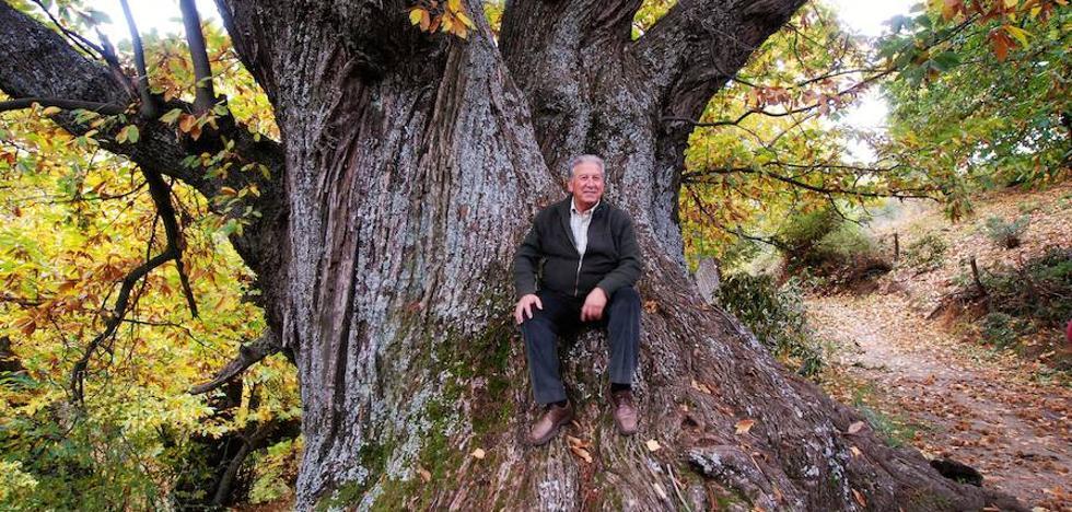 Tiempo de castañas en la Alpujarra