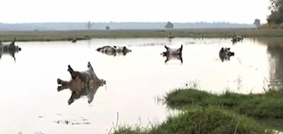 Mueren 109 hipopótamos en Namibia por un brote de ántrax