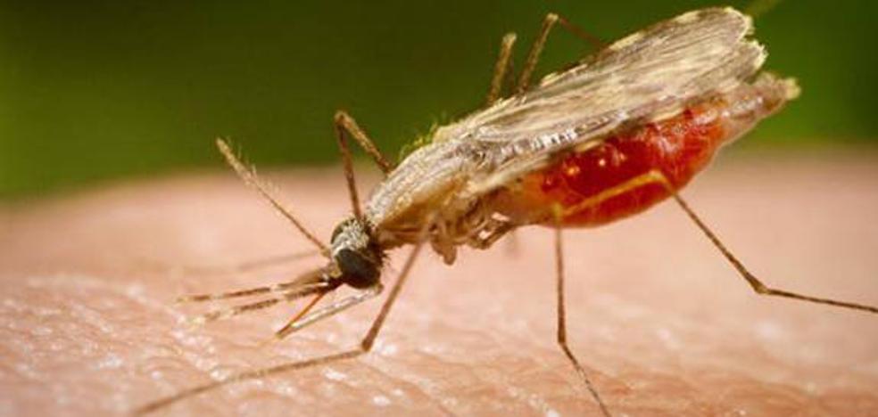 Un niño de Huesca muere de malaria tras regresar de un viaje a Gambia