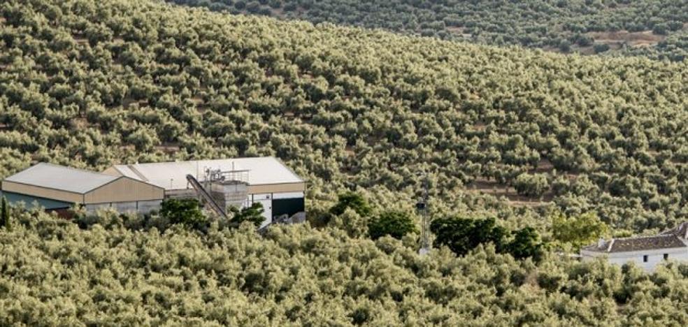 UPA, COAG y ASAJA piden que se amplíe el periodo de riego del olivar