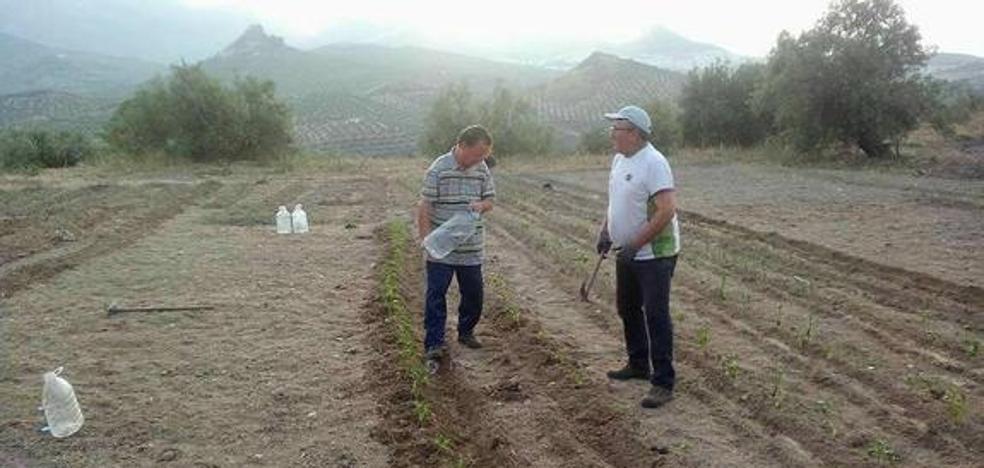 Campaña de captación de fondos del SAT para recoger la aceituna de la finca ocupada 'Cerro Libertad'