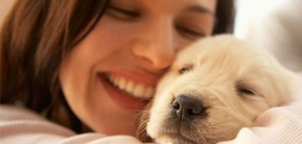 Admiten el permiso laboral para cuidar de un perro enfermo