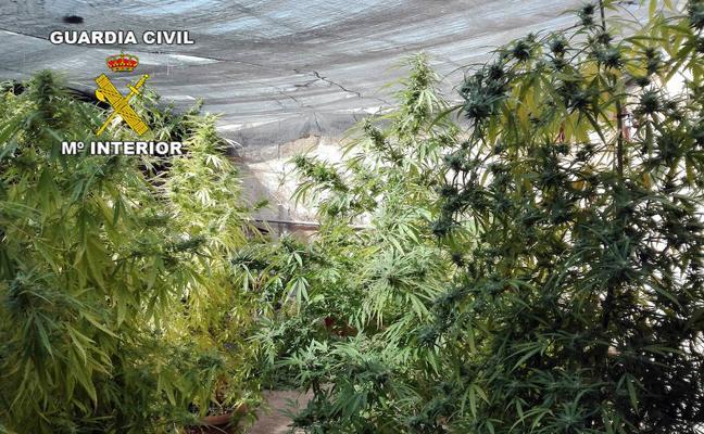 Cinco detenidos, once investigados y más de cien kilos de marihuana intervenidos en la provincia de Jaén