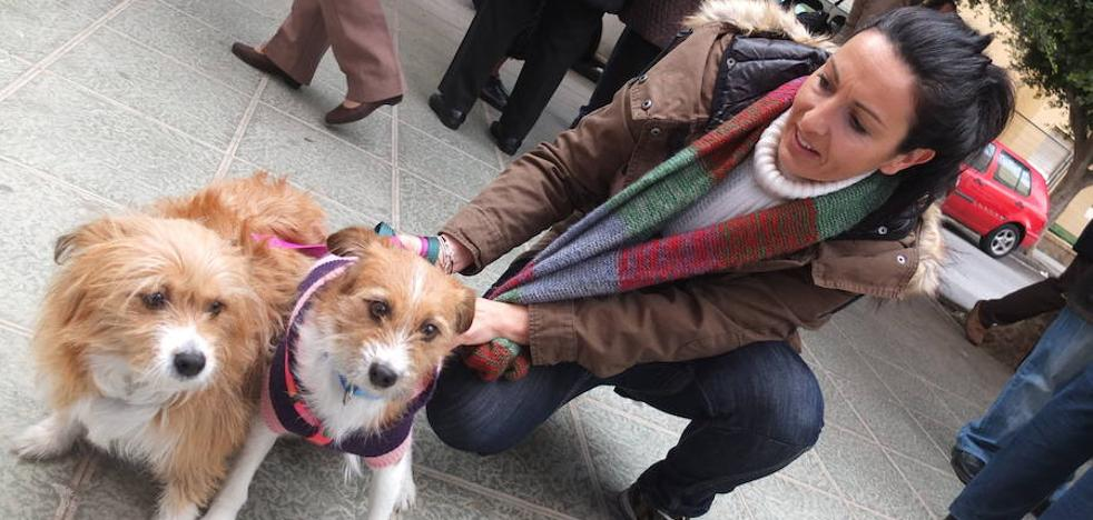 El Ayuntamiento de Almería limitará a cinco el número de perros o gatos en una vivienda