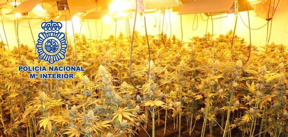 Detenida una pareja tras el desmantelamiento de una plantación de marihuana en una casa de Ogíjares