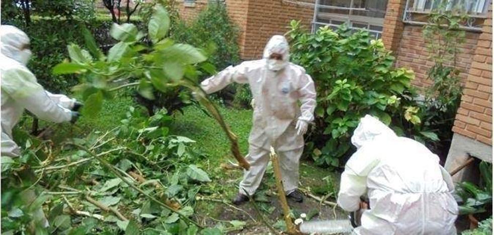 El jardín de la burundanga: retiran 66 plantas de la «droga del violador» de un patio comunitario