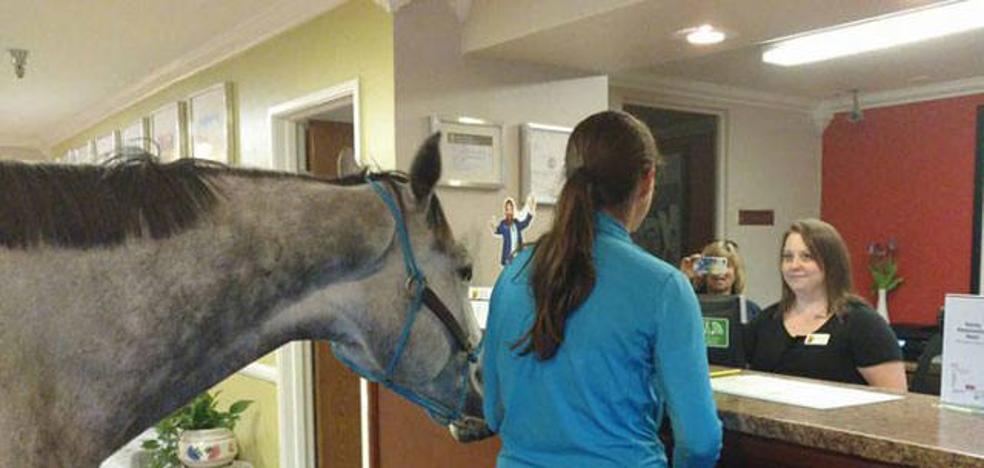 Una mujer pasa la noche en la habitación de un hotel con su caballo