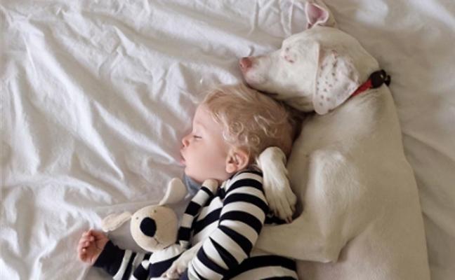 El tierno caso del perro maltratado que se asusta de todo el mundo menos de este bebé