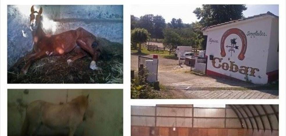 100.000 euros por dejar morir de hambre a 25 caballos