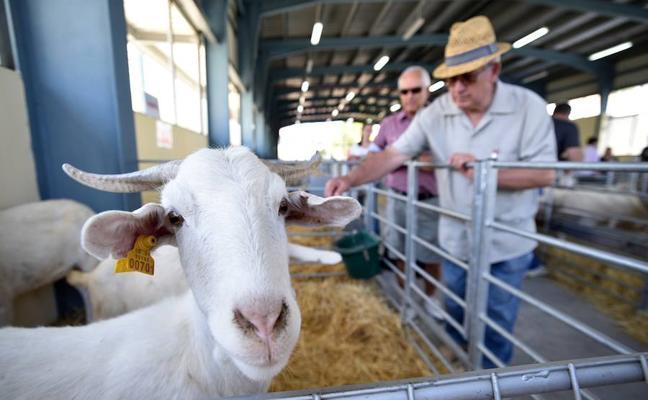 Jérez del Marquesado busca blindar sus tradiciones en su 175 Feria Ganadera