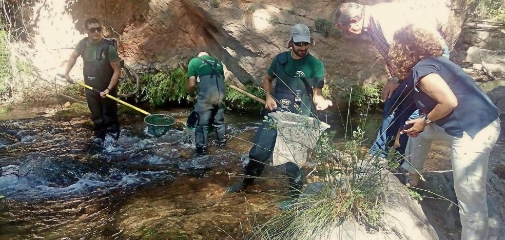 Jaén recupera su trucha pese a la sequía