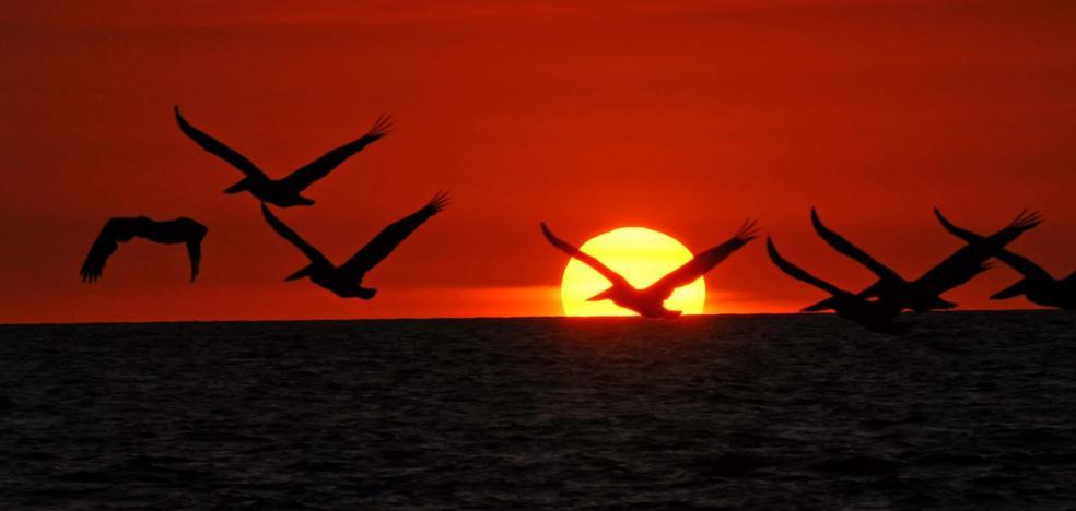 El devastador efecto del cambio climático en nuestros pájaros