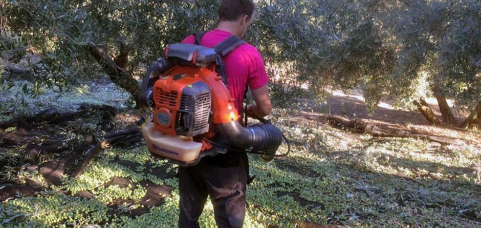 Jaén se apunta a la 'moda' del verde con los aceites de la cosecha temprana