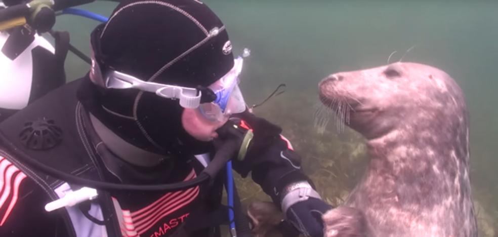 La adorable foca que ha conquistado a las redes