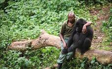 La desgarradora tristeza de un gorila tras ver a su madre asesinada por furtivos