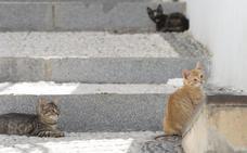 Cuando los gatos toman las calles de Granada