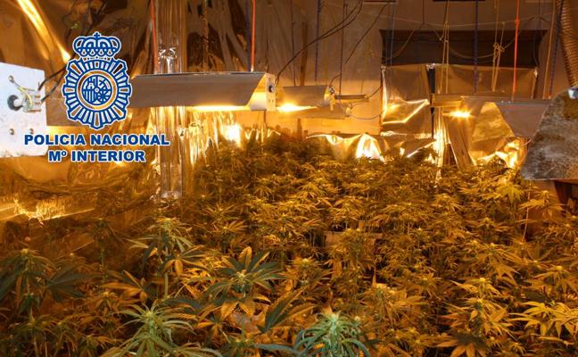 Localizan varias plantaciones de cannabis en dos viviendas de Granada