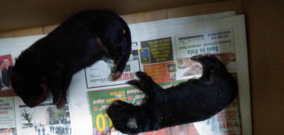 La Policía de Martos busca a los responsables de matar con saña a unos cachorros