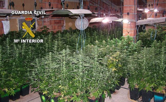 Una persona detenida y 515 plantas de marihuana intervenidas en una vivienda en construcción de Linares