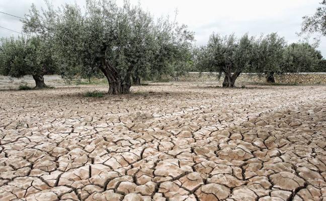 La última iniciativa de la Iglesia de Jaén ante la pertinaz sequía: pedir oraciones por la lluvia