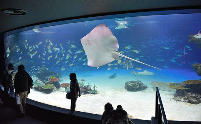 Tragedia en el acuario: mueren 1.235 peces por falta de oxígeno
