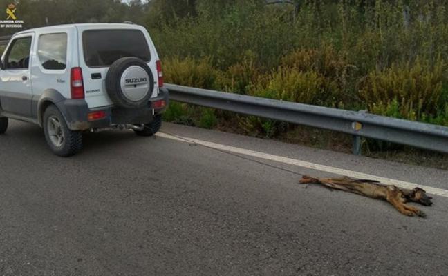 Absuelven al conductor acusado de matar a su cachorro atándolo al coche y arrastrándolo durante 10 kms