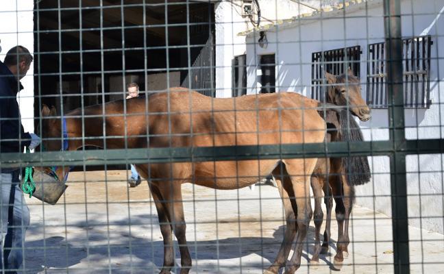 La jueza ordena el traslado de los caballos de Dúrcal por «riesgo inminente» de muerte