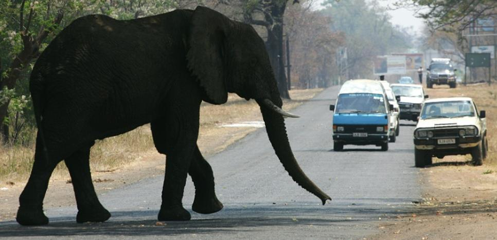 Un elefante mata a dos turistas aplastándolos cuando le iban a sacar una foto