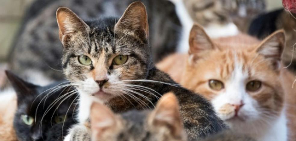 """Un gato callejero, principal sospechoso de un """"intento de asesinato"""""""