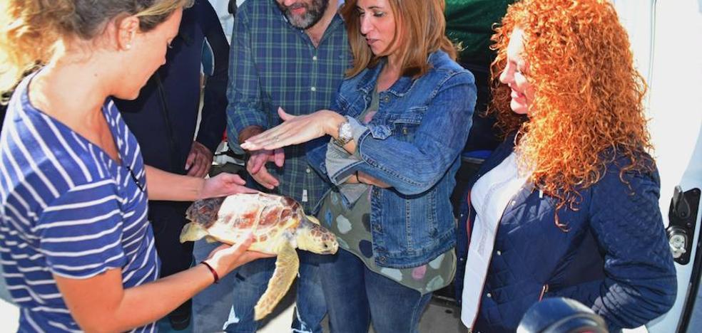 La Junta libera en Salobreña un ejemplar de tortuga boba afectada por desnutrición