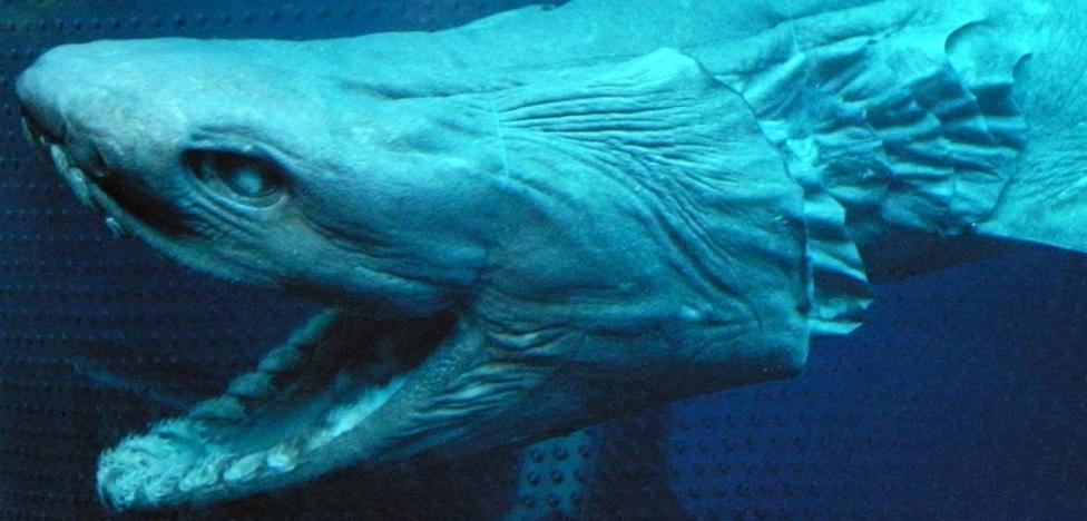 Atrapan a un tiburón de la era de los dinosaurios en Portugal