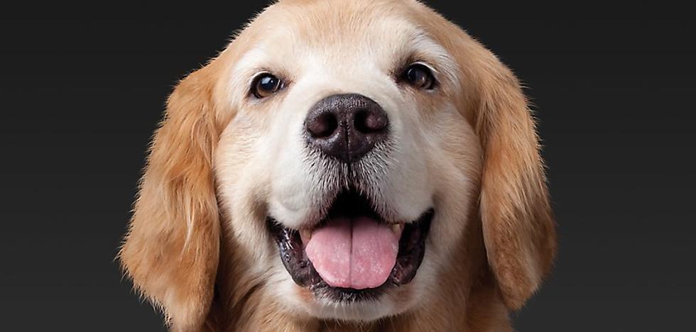 Orden de alejamiento para proteger a una perra maltratada