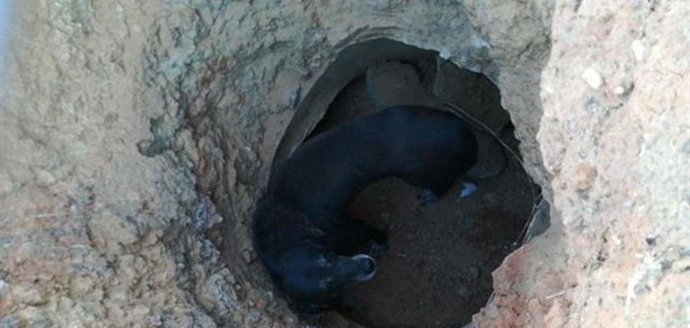 El calvario del perro que fue abandonado en un pozo