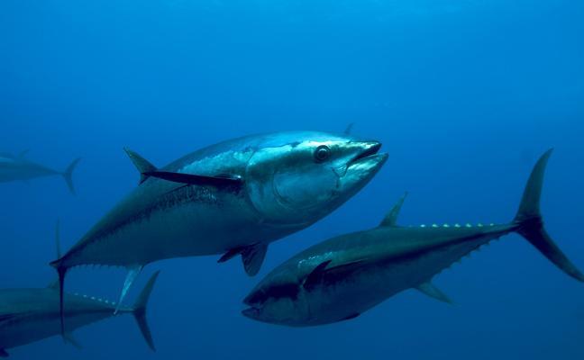 La especie que estuvo cerca de la extinción se multiplica: los pescadores se frotan las manos