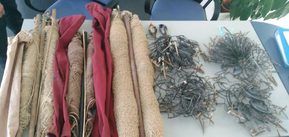 Denunciado un vecino de Jaén por la captura ilegal de aves fringílidas