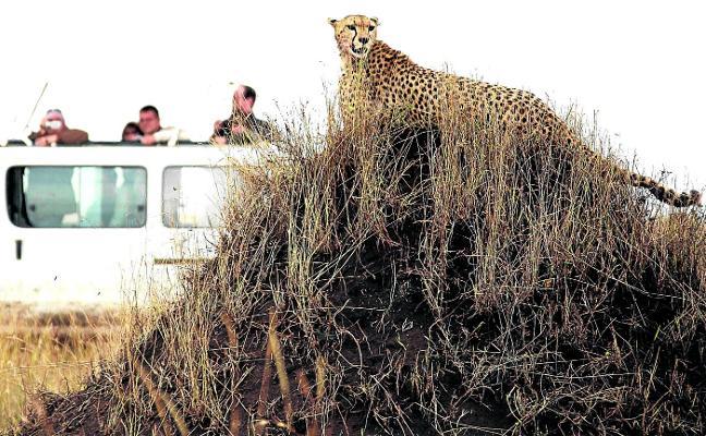 El peligro mortal que acecha en los safaris