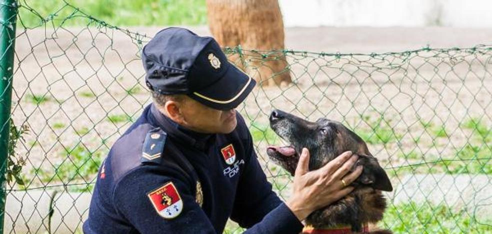 ¿Quieres adoptar un perro 'jubilado' de la Policía, las Fuerzas Armadas o los Bomberos?